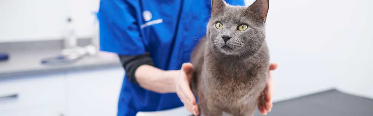 Worm control in cats